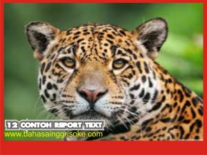 12 Contoh Report Text Bahasa Inggris Terbaru Dan Artinya