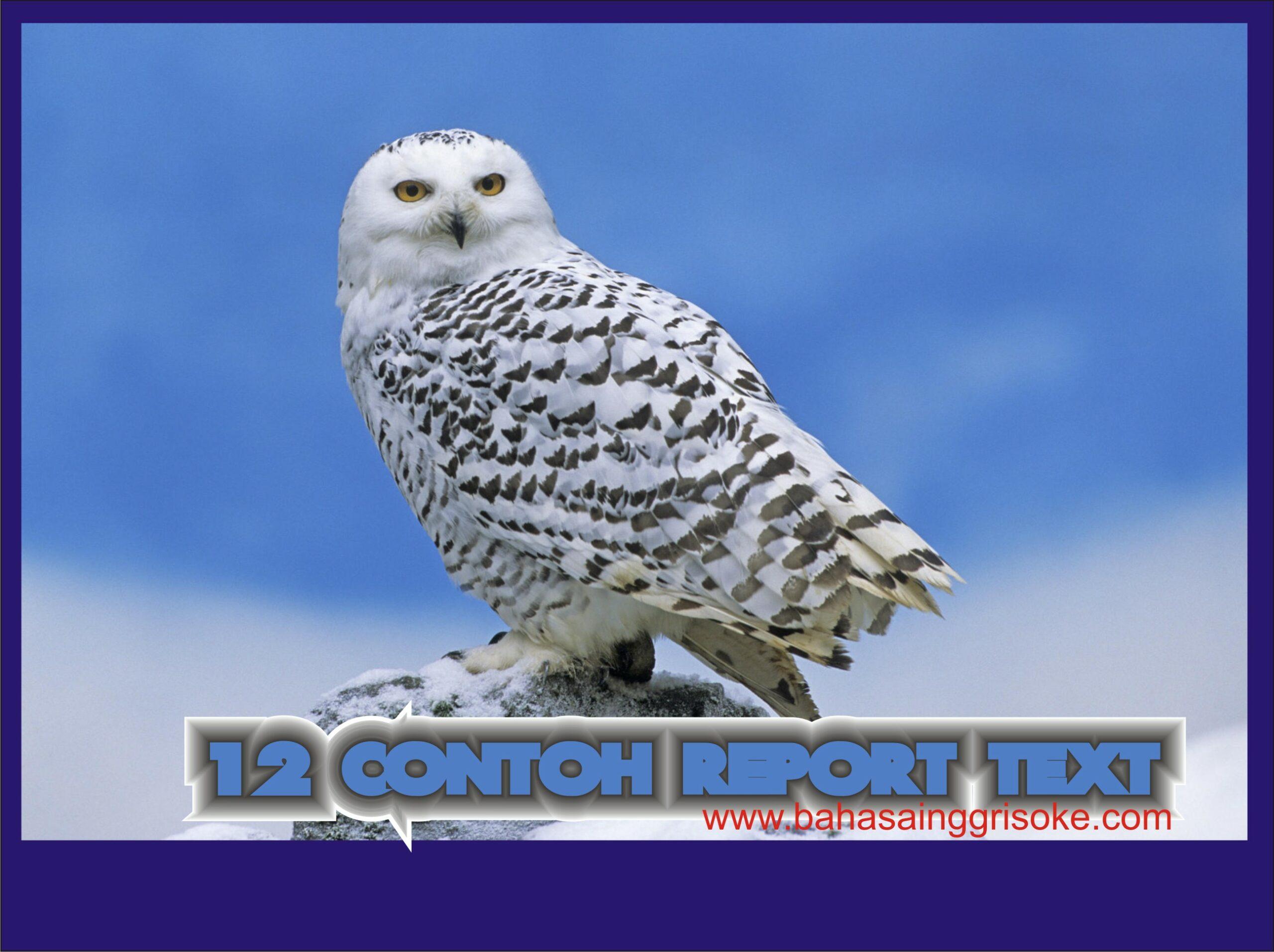 120 Contoh Report Text Bahasa Inggris Terbaru Beserta Artinya Bukuinggris Co Id