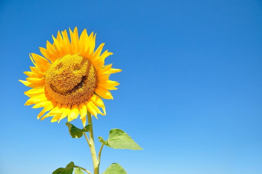 Teks Deskripsi Bunga Bahasa Inggris Beserta Artinya