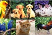 Kosa Kata Bahasa Inggris tentang Hewan