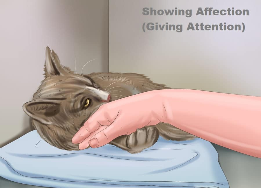 Showing affection